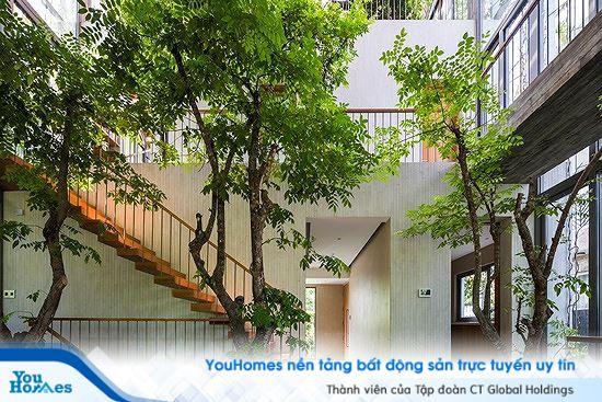 Không gian xanh tuyệt vời cho căn nhà phố