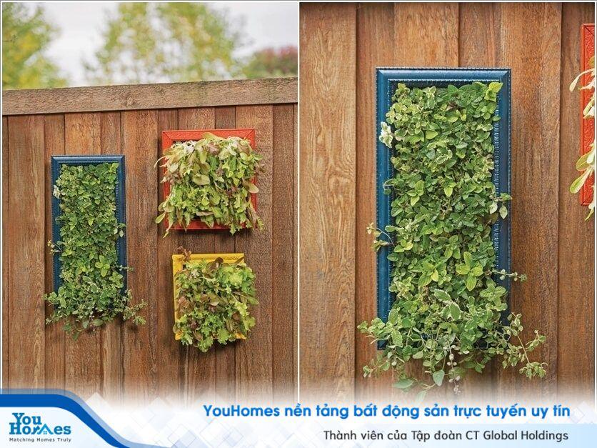 Ý tưởng vườn thẳng đứng tiết kiệm không gian tuyệt vời