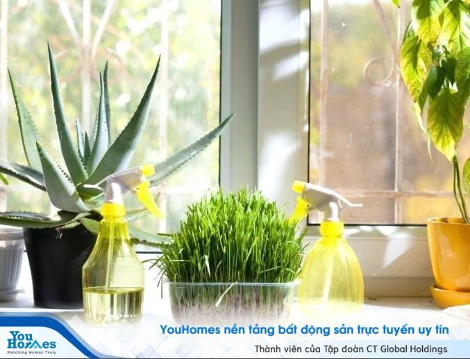 Điểm qua những loại cây trồng hợp phong thủy trong nhà bếp